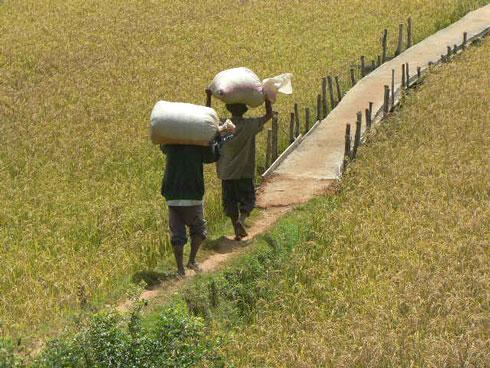Conquête du marché : Les manifestations économiques sont efficaces, selon les paysans