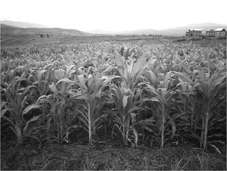 Agriculture de conservation: Solution confirmée face aux variabilités climatiques