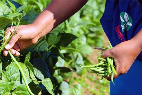 Lecofruit : 20 milliards ariary injectés dans le monde rural