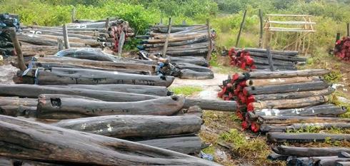 Bois de rose : Blanchiment de capitaux de plusieurs centaines de millions d'ariary