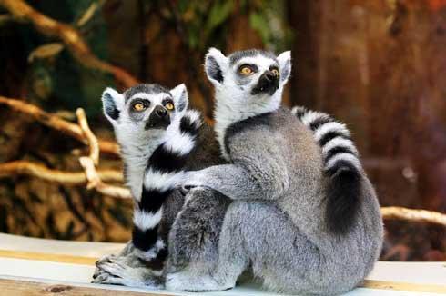 Application Lemurs Portal : La version offline disponible sur playstore
