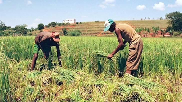FIDA :Lancement d'un mécanisme Covid-19 de relance en faveur des populations rurales