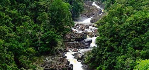 Parc national de Ranomafana : Un laboratoire naturel de classe mondiale
