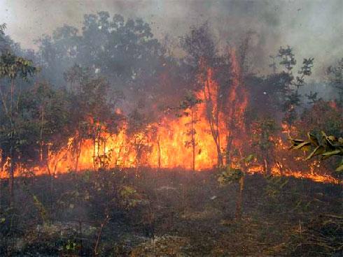FAPBM : 10 milliards d'ariary pour 35 aires protégées