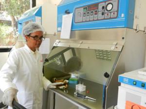 Les puces collectées seront testées dans ce laboratoire. (Photo Kelly)
