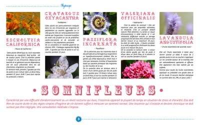 IN-pag4