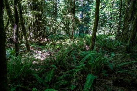 VancouverIsland-01273