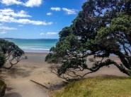 Auckland-4961