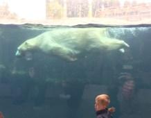 Midlife Sentence | Copenhagen Zoo