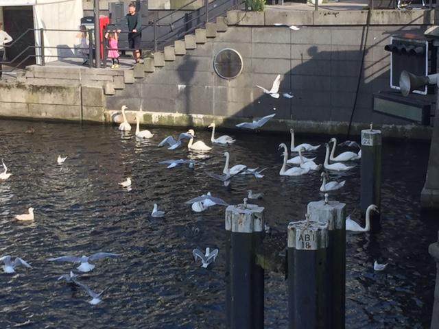 Midlife Sentence   Hamburg