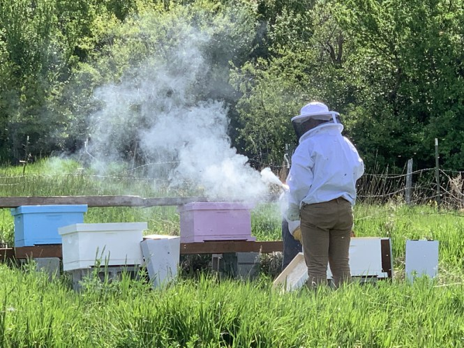 Bees as Emotional Support Animals - Midlife Sentence
