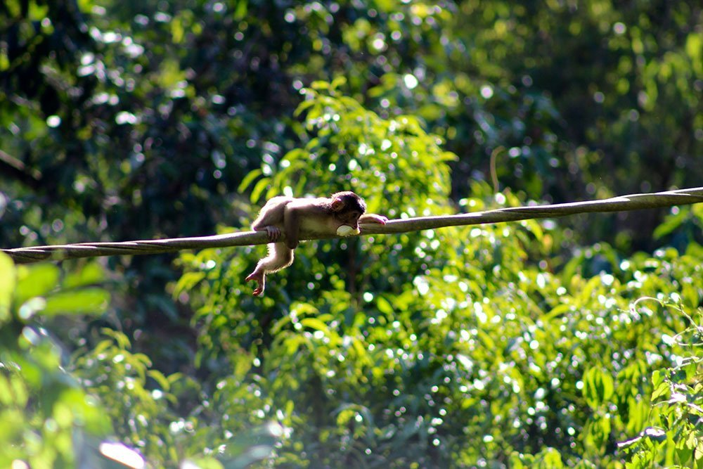 There are few places better to see wildlife than Borneo, Malaysia. On Kinabatangan River and the surrounding jungle you can see pygmy elephant & orangutans.