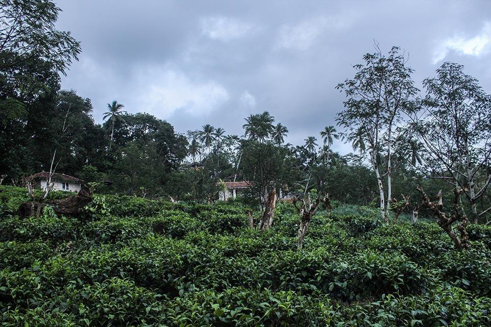 Green Dreams & Outdoor Showers – Kahanda Kanda, Sri Lanka.