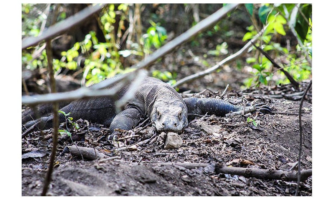 Pulau Komodo – Where to see real Dragons in Indonesia.