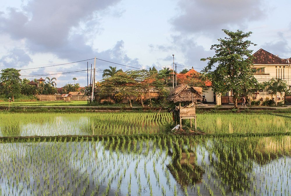 The 10 coolest Bali Airbnb under € 50.