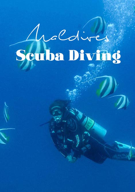 Keen to go scuba diving in the Maldives? Of course, you are. Some tips on the best resorts and liveaboard in the Maldives and where to find Nemo. #maldives #scubadiving #liveaboard