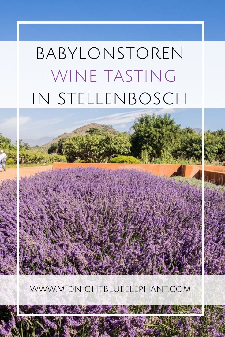 A rule says: if you come to Cape Town & the Winelands you have to drink wine. All about Babylonstoren, my favorite place for wine tasting in Stellenbosch & why you should go there. #stellenbosch #capetown #babylonstoren #winetasting #southafrica