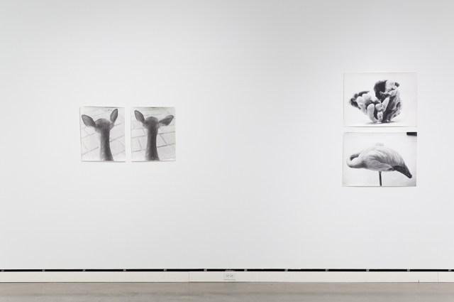 Jochen Lempert, installation view, Rochester Art Center. Left: Symmetrie & Körperbau (Symmetry & Architecture of the Body) (deer), 1995. 2 b&w photographs, silver gelatin prints. 21 ¼ x 17 ¼ inches each. Right: Symmetrie & Körperbau (Symmetry & Architecture of the Body) (sponge, flamingo), 1997. 2 b&w photographs, silver gelatin prints. 21 x 28 ¾ inches each.