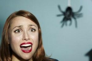 miedo a las arañas