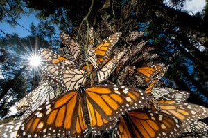 miedo a las mariposas