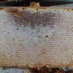 Les bienfaits du miel, Bienfait du miel, vertu du miel, les vertus du miel, miel sante