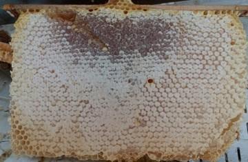 miel en rayon, miel avec cire, miel avec rayon, miel et rayon de cire, miel rayon de cire, miel en brèche, miel au couteau, miel avec morceau de rayon, miel avec morceau de ruche, miel avec morceau de rayon