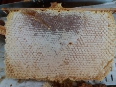 rayon de miel, miel en rayon, rayon miel, miel en rayon bio, miel avec rayon, miel rayon, miel en rayon naturel, rayons de miel, miel en rayon proprietes, miel en rayon bienfaits