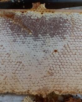 miel bio, miel naturel, miel biologique, miel, miel de montagne