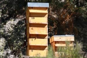 ruche warré, apiculture ruche warré, les ruches warré, apiculteur professionnel warré, ruche