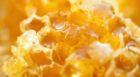 rayon de miel entier, miel en rayon
