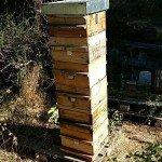 ruche warré, ruche warre, ruche écologique, petite ruche, ruche de montagne