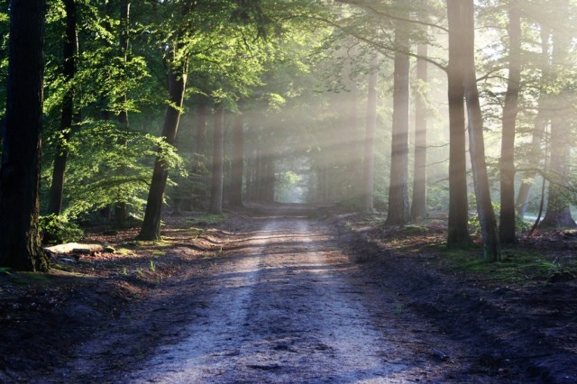 road-sun-rays-path-large