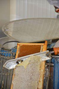 Extraction avant fermeture estivale