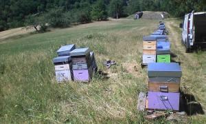 Ruche de miel de chataignier