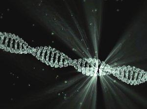 Cadena de ADN ,la abeja ibérica tiene linajes de áfrica y Europa