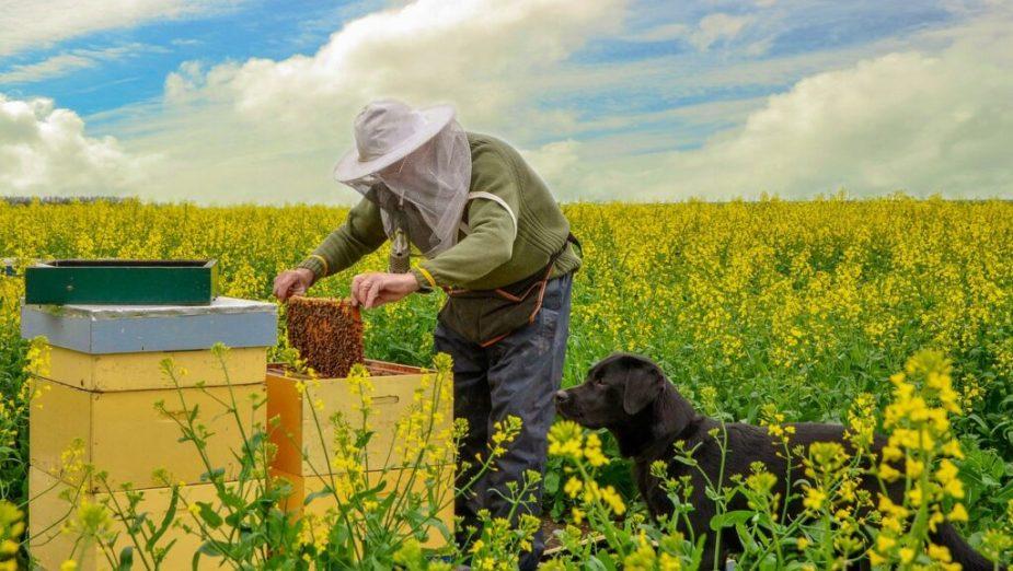 Apicultor revisando sus colmenas, con un perro perro. En un campo con flores.