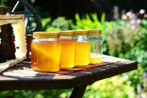 Del néctar de flores fabrican las abejas la miel