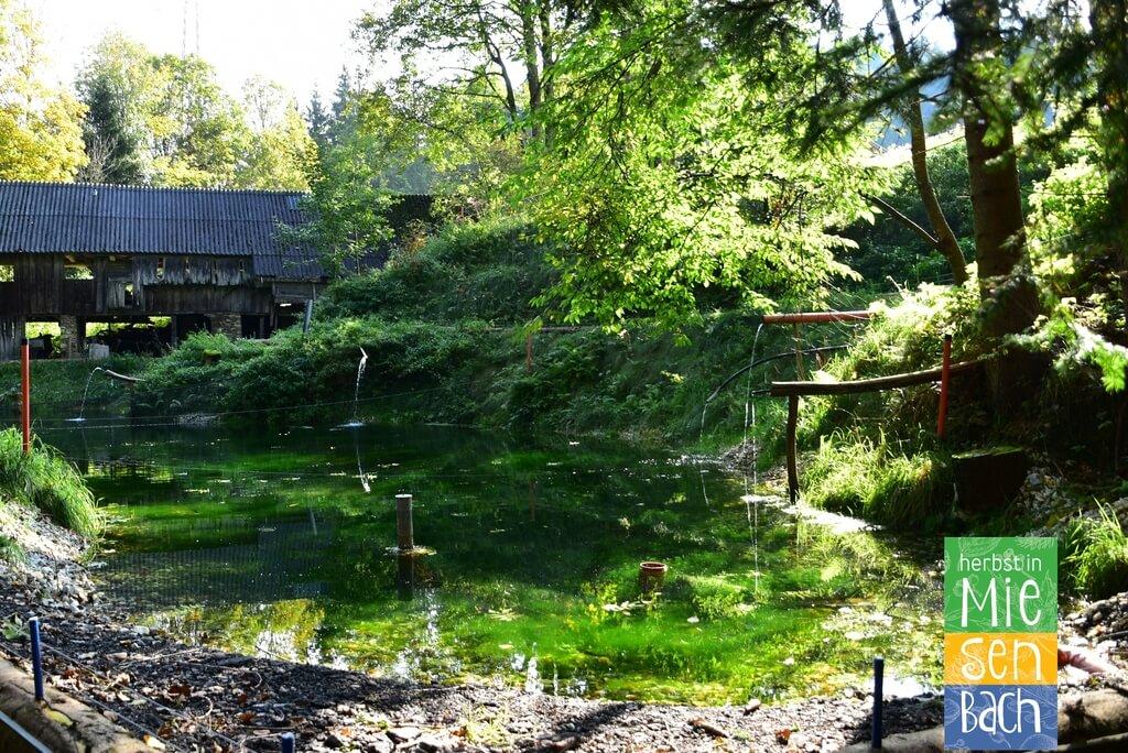 Herbst in Miesenbach (19)