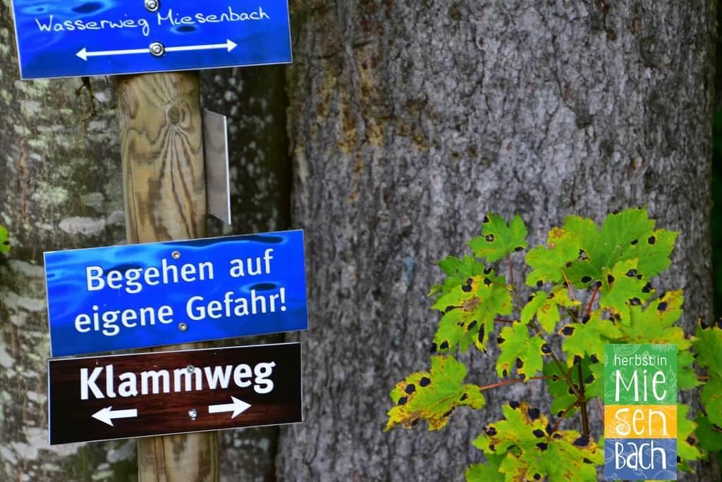 Herbst in Miesenbach (20)