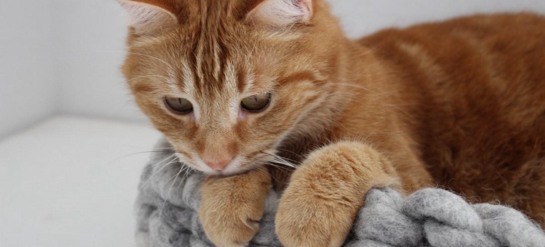 Katzenbetten