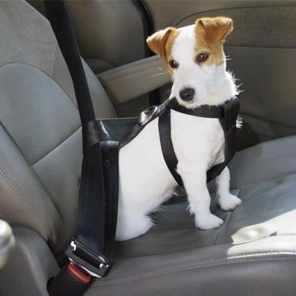 Comprar Arns de seguridad en el coche para perros online