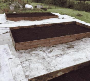 Garden Maintenance Cambuslang 3