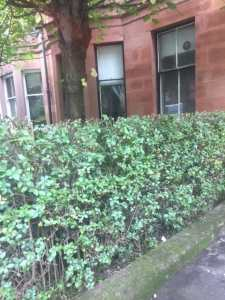 hedge Trimming Bearsden