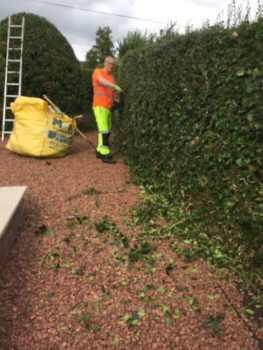 Hedge Maintenance Glasgow Southside