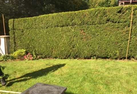Hedge Reduction Southside