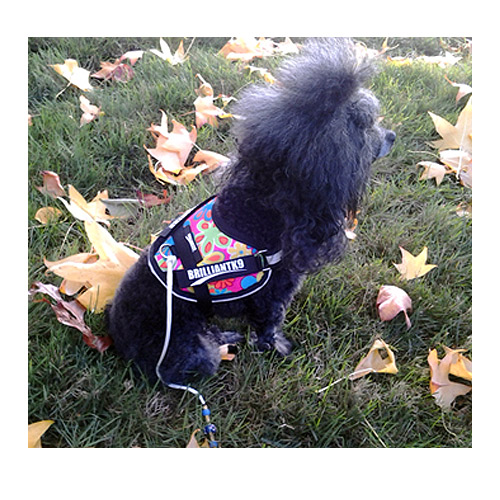 Toy Dog Harness - Mighty Mite Dog Gear