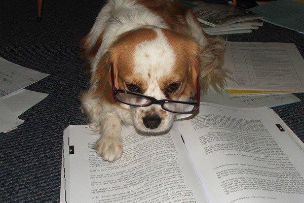 cani che leggono