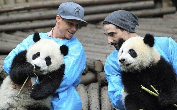 backstreet boys cantano ai panda