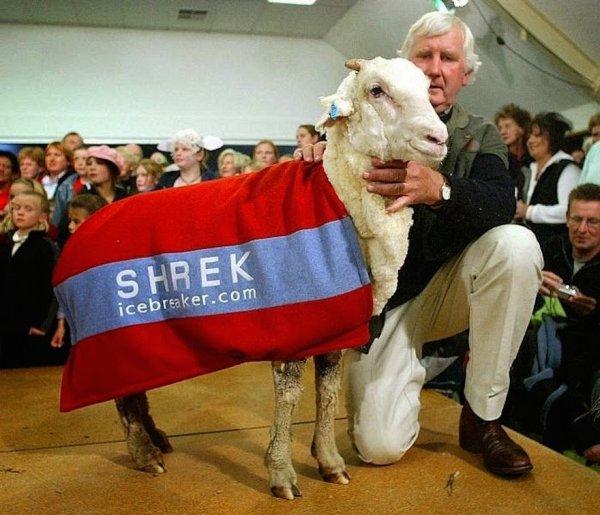 shrek-the-sheep-26