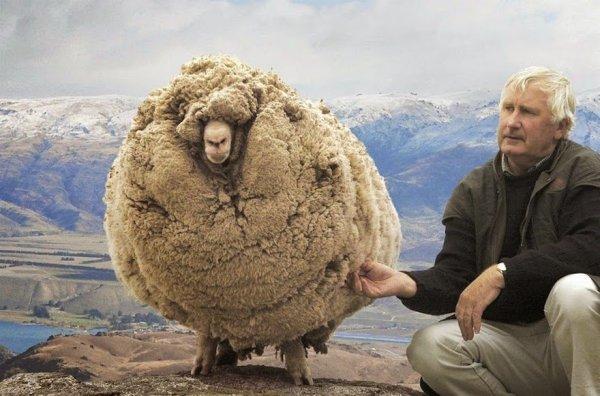 shrek-the-sheep-65